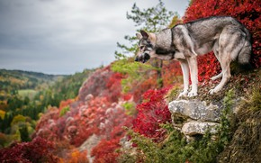 Wallpaper dog, autumn, each