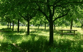 Picture Grass, Path, Trees, Nature, Grass, Trees