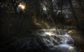 Picture forest, the sun, river, stream