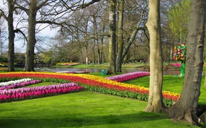 Picture flowers, Park, river, spring, tulips, Netherlands, tulips, Netherlands, Keukenhof, hyacinths, parks, hyacinths