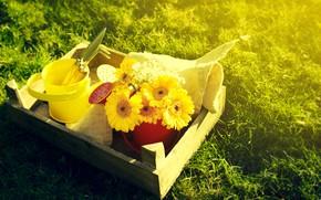 Picture grass, flowers, yellow, lake, bouquet of gerberas, bucket, garden tools
