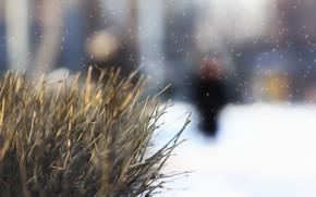 Picture winter, snow, background, Bush, picture, twigs