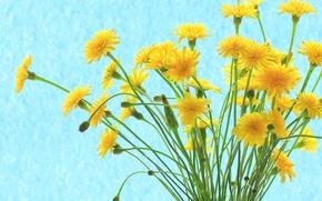 Picture bouquet, petals, stem