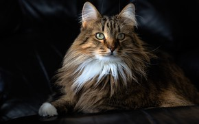 Picture cat, cat, portrait
