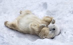 Wallpaper ice, puppy, animals, nature, winter, snow, playing, wildlife, wild, paws, fur, son, mother, Polar bears