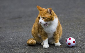 Picture cat, red, the ball