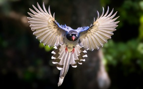 Wallpaper bird, wings, flight, bokeh