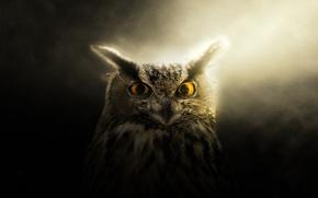Wallpaper eyes, look, light, owl
