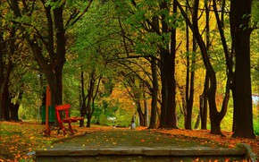 Picture Autumn, Trees, Bench, Park, Fall, Park, Autumn, Falling leaves