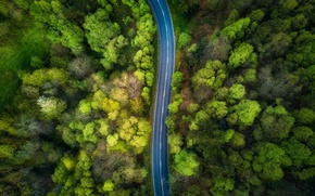 Wallpaper nature, forest, the view from the top, trees