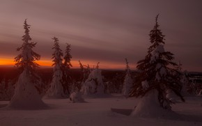 Picture winter, sunset, nature
