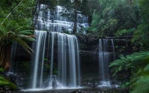 Picture forest, waterfall, Australia, cascade, Australia, Tasmania, Tasmania, Mount Field National Park, National Park MT field, …