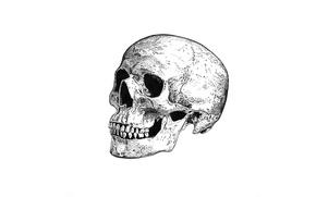 Wallpaper skull, death, sake