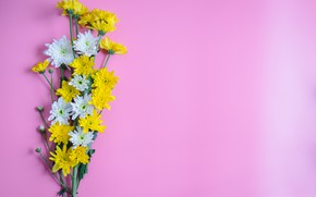 Picture flowers, bouquet, pink background, Chrysanthemum