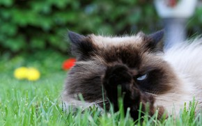 Picture cat, grass, look