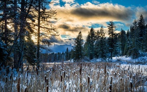 Wallpaper winter, morning, forest, nature, reed