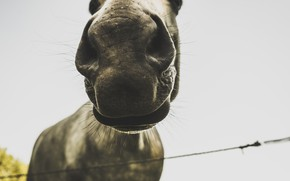 Picture face, background, horse