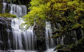 Picture trees, waterfall, New Zealand, cascade, New Zealand, Otago, Otago, Purakanui Falls, Tarara, Tarara