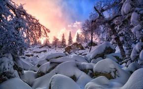 Wallpaper winter, snow, sunset, spruce