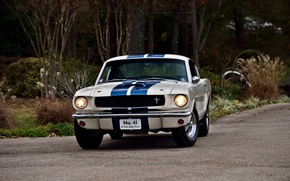 Picture Mustang, Ford, Fastback, muscle classic, 1965., Shelby GT 350