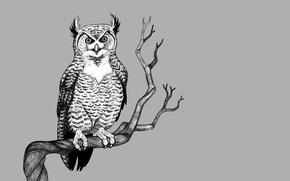 Picture tree, owl, bird, branch, light background, owl