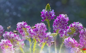 Picture flowers, nature, beautiful, by duongquocdinh