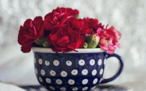 Picture Cup, Clove, Carnations