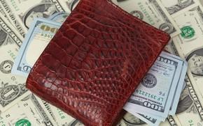 Picture money, wallet, crocodile skin