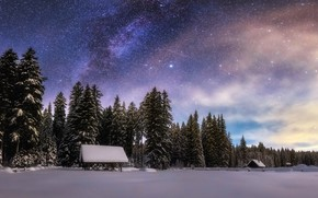 Picture winter, forest, the sky, stars, snow, night