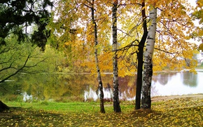 Picture autumn, leaves, water, nature, birch
