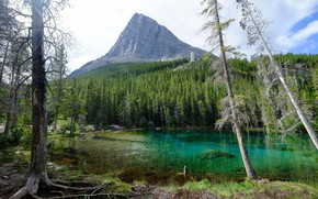 Picture Lake, Mountain, Spruce forest