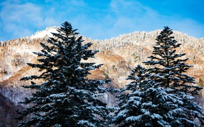 Picture winter, forest, the sky, the sun, snow, trees, mountains, Japan, Gifu, Hirayu, Takayama