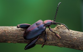 Picture background, beetle, branch, insect