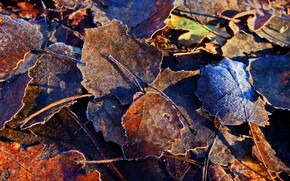 Picture Yellow, Autumn, Leaves, Frost, Frost, Dry, Freezing, Fallen