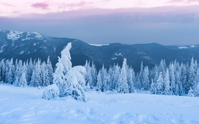 Picture tale, landscape, the sky, tops, the top, snow, wonderful, clouds, forest, clouds, hills, Christmas trees, ...