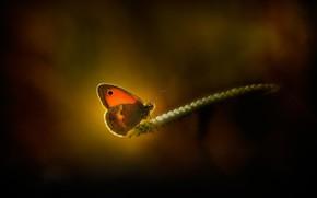 Picture macro, light, butterfly, spike