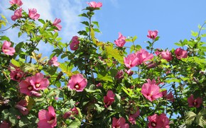 Picture the sky, flowers, pink, Meduzanol ©