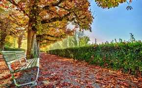 Picture autumn, leaves, the sun, trees, bench, Park, yellow, alley
