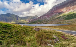Picture clouds, mountains, lake, Wales, sheep, Snowdonia