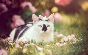 Picture cat, look, portrait, petals, bokeh, cat