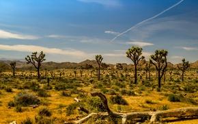 Picture trees, mountains, desert, CA, USA, National Park Joshua tree