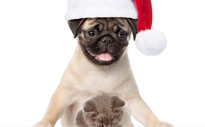 Picture kitty, dog, pug, New year, Christmas, cat, dog, New Year