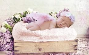 Wallpaper joy, flowers, romance, child, beauty, photoshoot, beautiful, baby, newburn