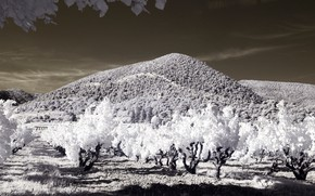 Picture trees, mountains, France, garden, infrared the, Venterol
