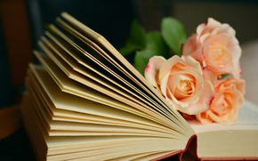 Picture flowers, roses, bouquet, book