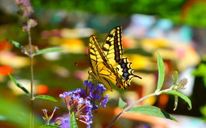Picture Macro, Flowers, Spring, Butterfly, Flower, Spring, Macro, Butterfly