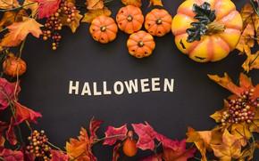 Wallpaper Halloween, pumpkin, black background, pumpkin, Halloween, leaves