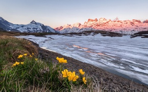 Picture flowers, mountains, ice