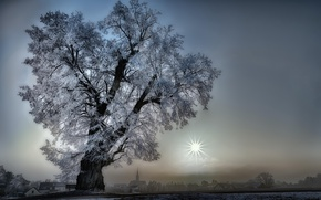 Picture nature, fog, tree
