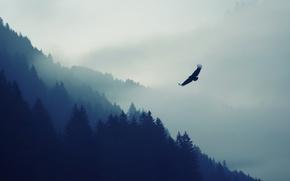 Wallpaper Nature, Fog, Bird, Trees, Forest, Animal